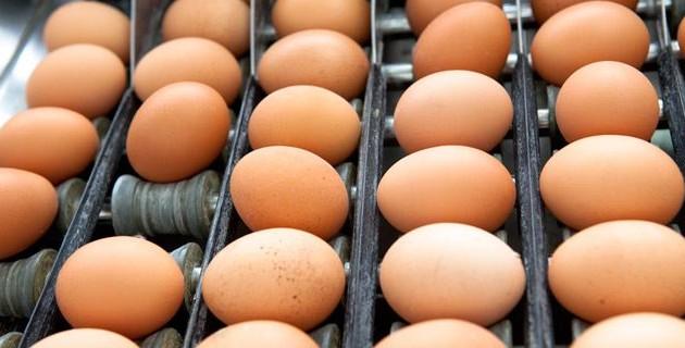 07-uova-produzione_6871