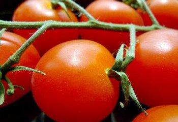 'Dieta del pomodoro' speranza contro il cancro allo stomaco