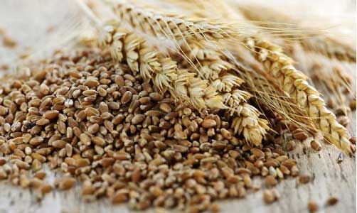 cereali_nella_dieta_vegetar