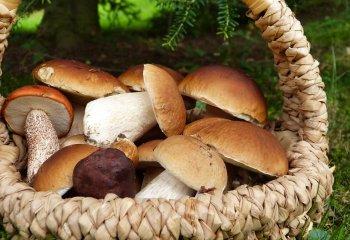 Ecco perché dovreste aggiungere i funghi al vostro pasto