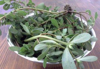Portulaca, la pianta infestante ottima per la salute (e una ricetta)