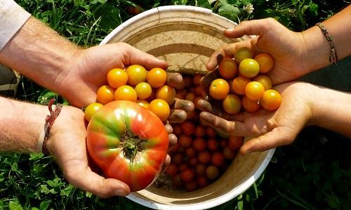 truffa cibo biologico report